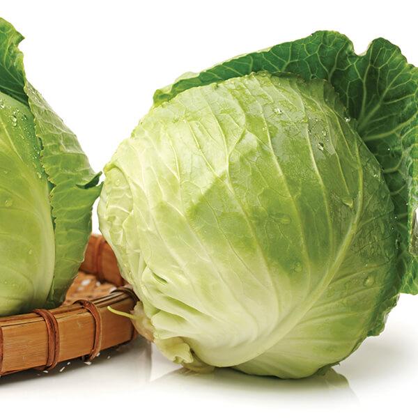 Martin Riendeau Gardens | Fresh green cabbages