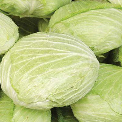Martin Riendeau Gardens | Fresh taiwanese cabbages